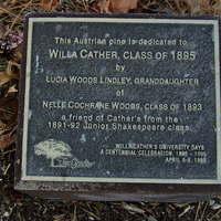 Austrian Pine Plaque