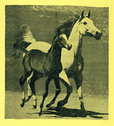 Horses on front cover.