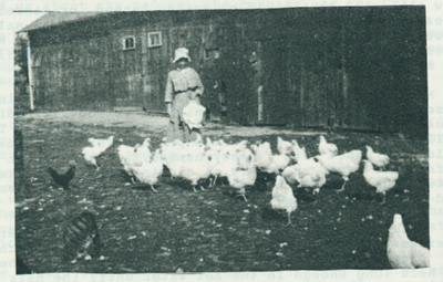 Verna Metzger standing with a flock of hens in the 1930s.