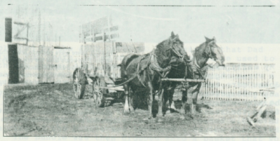 A typical team and wagon used to husk corn in the 1920s and 1930s.