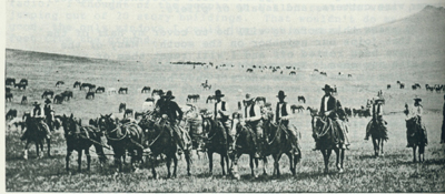 Landscape photo of cattle drivers, taken by L. A. Huffman.