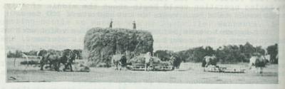 Large haystack.