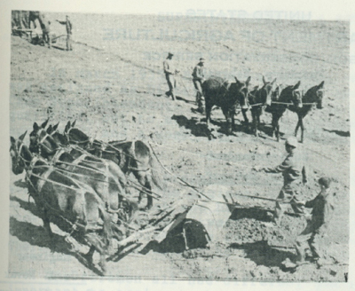 Thousands of cubic yards of earth were moved with horses and mules and the fresno, in building dams and terraces.