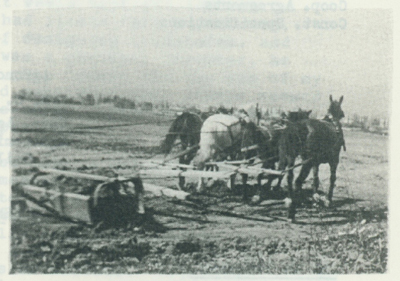 Four Horse Team with loaded fresno.